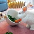 Що їдять кролики в домашніх умовах?