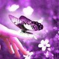 До чого сниться метелик? Тлумачення популярних сонників