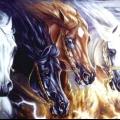 До чого сняться коні: тлумачення снів. До чого сняться білі і чорні коні