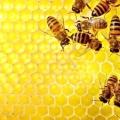 Як зберігати мед? Зберігання меду в домашніх умовах