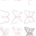 Як намалювати метелика олівцем поетапно