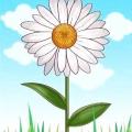 Як намалювати ромашку, королеву польових квітів