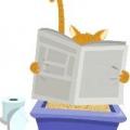 Як відучити кошеня гадити в недозволеному місці? Як зберегти будинок в чистоті, якщо ви завели кошеня
