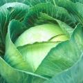 Як гасити капусту на сковороді? Тушкована капуста: рецепт, фото