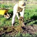 Які добрива вносити восени. Комплексні, мінеральні та калійні добрива для грунту