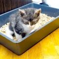 Який наповнювач для кішок краще? Наповнювач для котячого туалету - відгуки, ціни