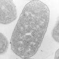 Органели клітини. Їх функції