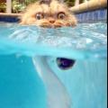 Чому кішки бояться води? Як привчити кішку до води?