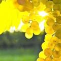 Сонник: до чого сниться виноград чорний, синій або зелений