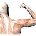 Атрофія м'язів: симптоми, причини, лікування