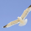 Як літають птахи? Висота їх польоту