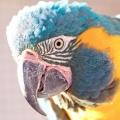 Як назвати папугу, щоб ім'я йому сподобалося