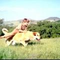 Кіно про собак. Рекомендовано до сімейного перегляду