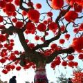 Китайський новий рік 2014, 2015