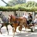 Красиві клички коней. Кращі клички для кобил і жеребців