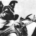 Хто перший полетів у космос? Юрій Гагарін - перша людина, яка полетіла в космос