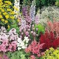 Багаторічні квіти для дачі. Багаторічні квіти, квітучі все літо: огляд кращих сортів