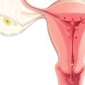 Можуть йти місячні при вагітності? Причини місячних при вагітності