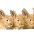 Поїлка для кролів: види, опис. Поїлки для кроликів своїми руками