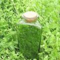 Трава мокриця: лікувальні властивості і протипоказання. Мокриця (трава): використання в медицині