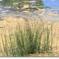 Водні ресурси світу: характеристика та використання