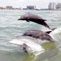 Забруднення світового океану - одна з найгостріших екологічних проблем сучасності. Джерела, причини, наслідки та шляхи вирішення проблеми