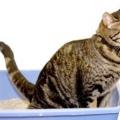 Що робити, якщо у кота пронос?