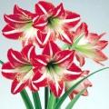 Квітка амариліс - особливості розмноження та догляду
