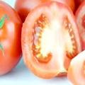Кращі сорти томатів для уралу допоможуть отримати багатий врожай