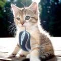 Том і Джеррі: як зловити мишу гуманними методами