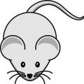 Кінець сірим бандитам, або як позбутися мишей в квартирі