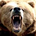 Сонник: до чого сняться ведмеді