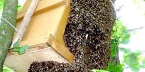 Пастка для бджіл: робимо своїми руками